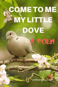 My Little Dove - Poem
