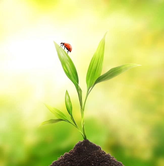 пътят на зърното стихотворение